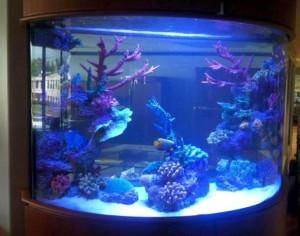 Bow Front Acrylic Aquarium