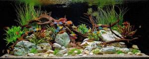 Colorful Freshwater Aquarium