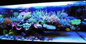Saltwater Reef Aquarium