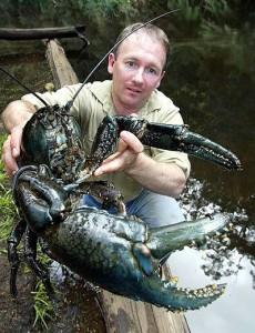 Tasmanian Giant Crayfish A. Gouldi