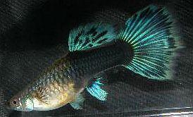 Half Black Green Female