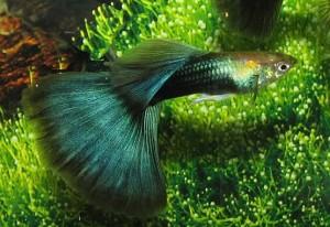 Half Black Green