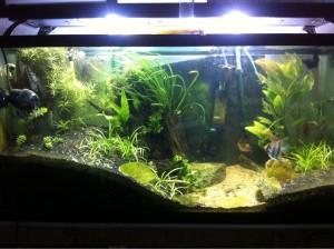 Freshwater Tank Lighting