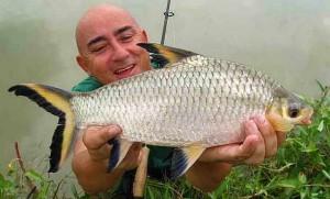 Bala Shark (Balantiocheilus melanopterus) Catch